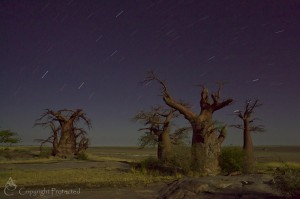 Star-trails and moonlit baobabs
