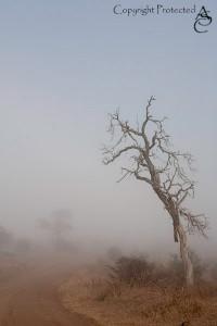 KrugerParkMist_IMG_6452